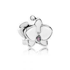 фотография шарм белая орхидея 792074EN12-1